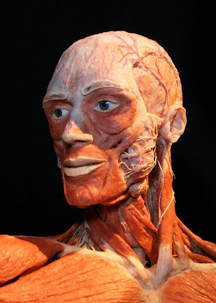 Body Worlds Critiques Reviews Criticism Real Human Bodies Anatomy